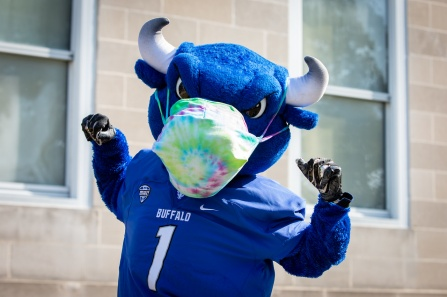 photo of blue squishy balls promoting UB Wellness Services.